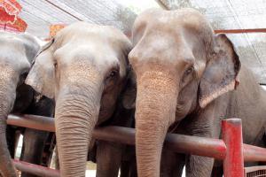 Ayutaya_Elephant_1203-108.jpg