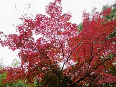 2012.11.30 公園モミジ