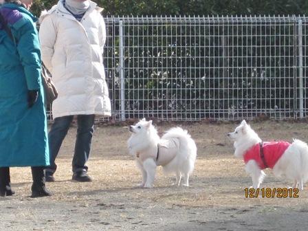 20121219~20鬼怒川ドッグラン