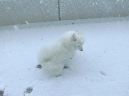 2013.1 雪チョコ