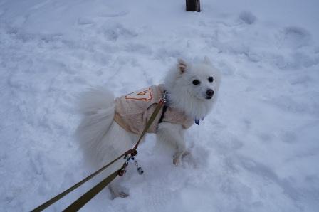 雪初体験シロン