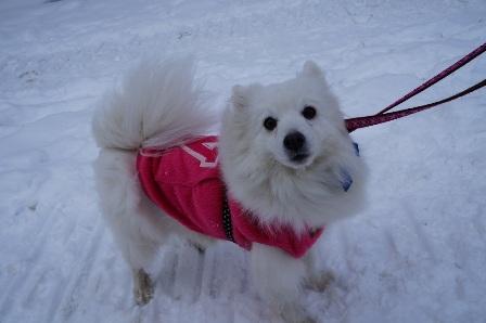 雪初体験チョコ