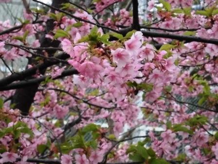水神公園桜2