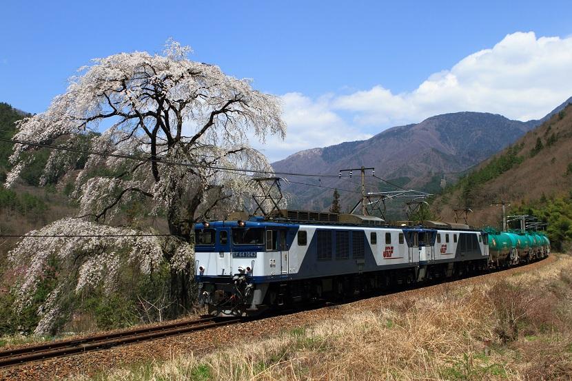 揺れるか細い枝に色気を感じる須原の銘木ここにあり!