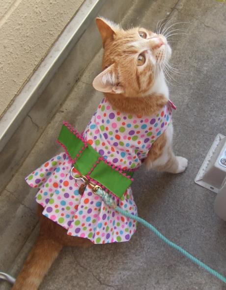 dress_convert_20130316090759.jpg