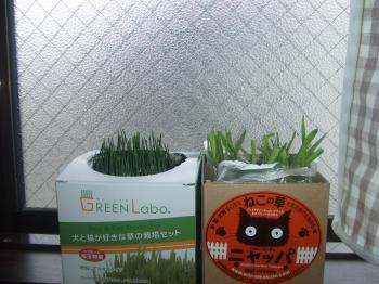 green+015_convert_20130303141320.jpg
