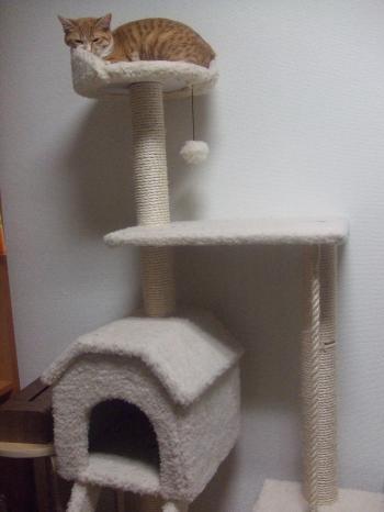 tower+001_convert_20130310182301.jpg