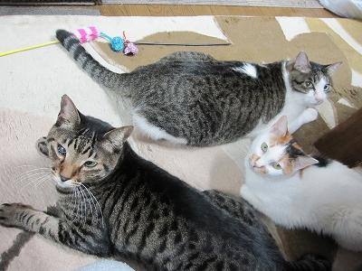 猫 猫 猫