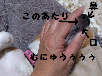 DSC_0726-1.jpg