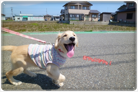 2012,4,19お散歩2