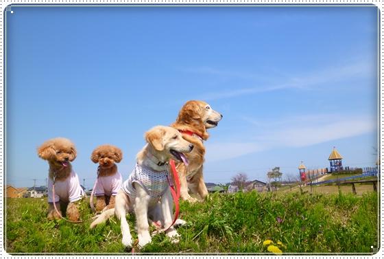 2012,4,19お散歩1
