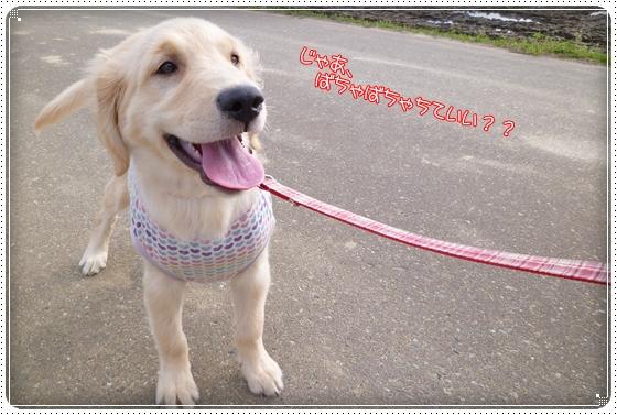 2012,4,20お散歩12