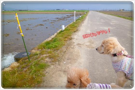 2012,4,20お散歩10