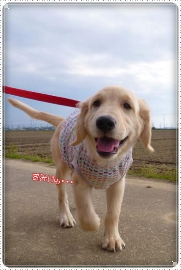 2012,4,20お散歩4