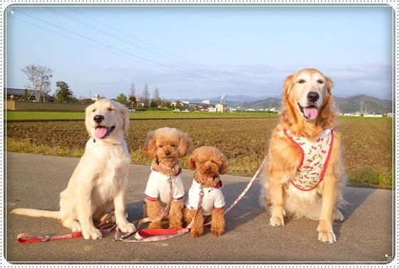 2012,4,23お散歩1