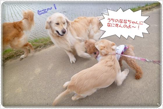 2012,5,10お散歩6
