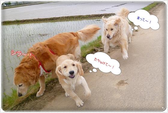 2012,5,10お散歩4