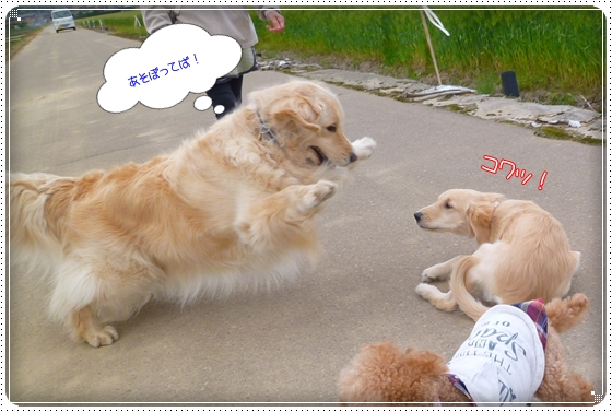 2012,5,10お散歩3