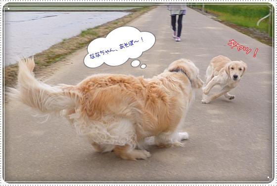 2012,5,10お散歩2