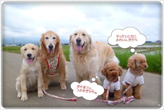 2012,5,10お散歩9