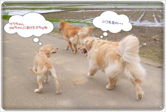 2012,5,10お散歩7