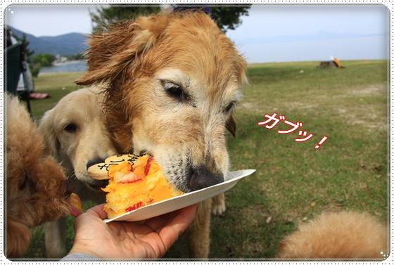 2012,5,15琵琶湖13