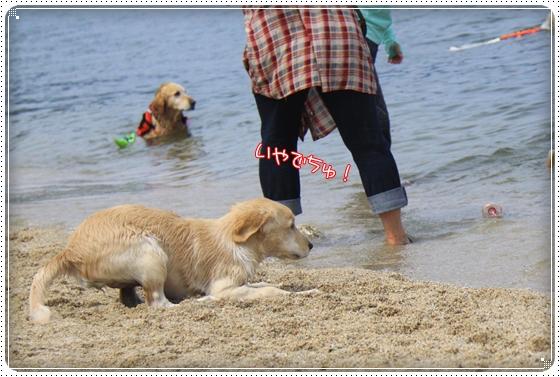 2012,5,16琵琶湖5