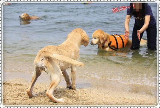 2012,5,16琵琶湖4