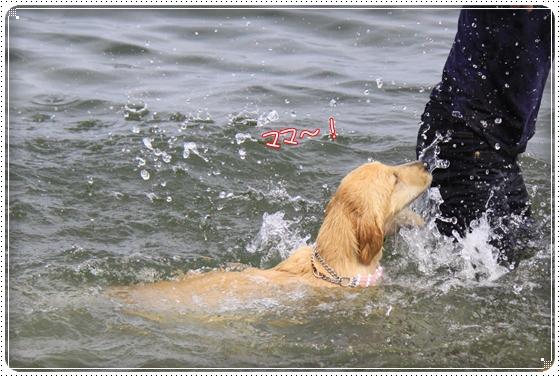 2012,5,16琵琶湖9