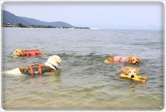 2012,5,16琵琶湖13