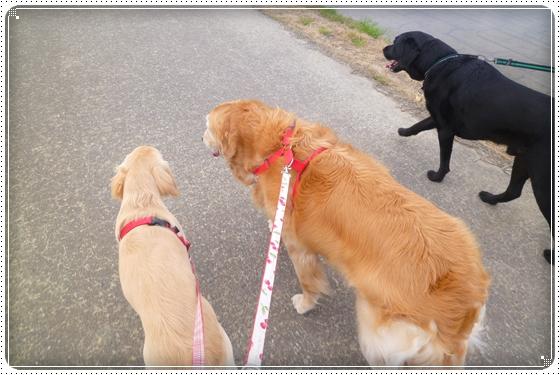 2012,5,21お散歩5