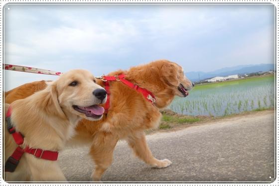 2012,5,21お散歩2