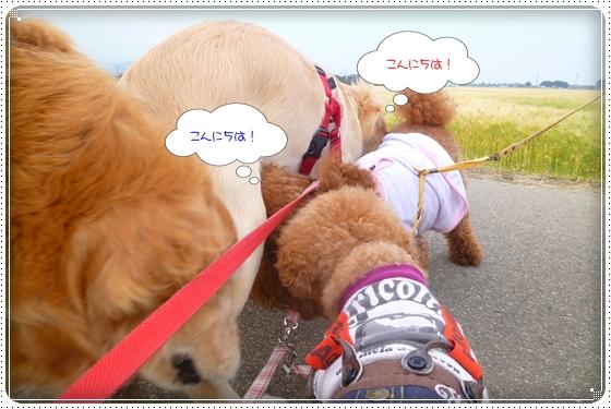 2012,5,23お散歩6