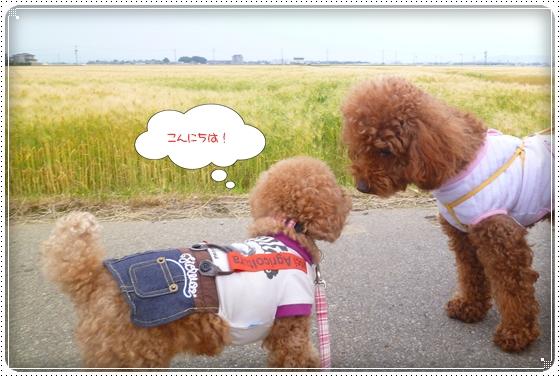 2012,5,23お散歩5