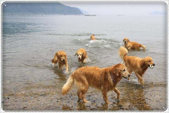 2012,6,2琵琶湖2