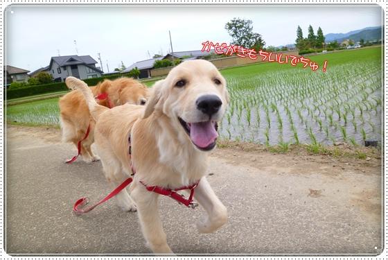 2012,6,5お散歩3