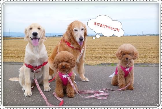 2012,6,5お散歩7