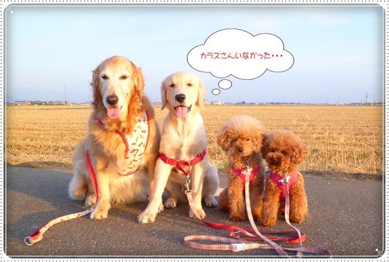 2012,6,7お散歩7