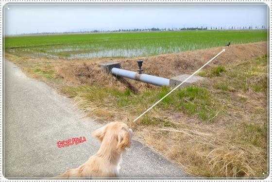 2012,6,7お散歩4