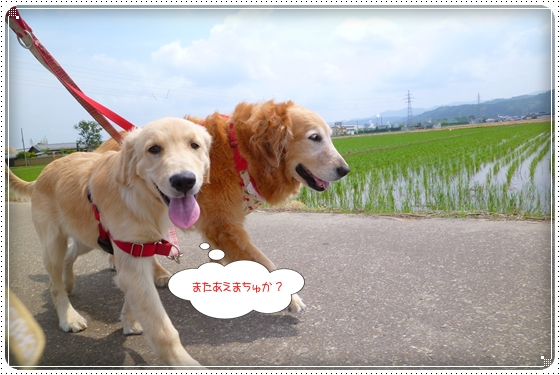 2012,6,7お散歩3