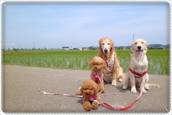 2012,6,7お散歩1