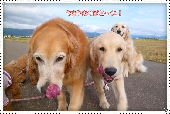 2012,6,17お散歩5