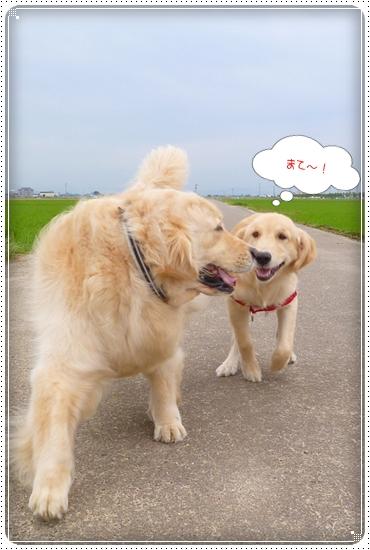 2012,6,18お散歩6