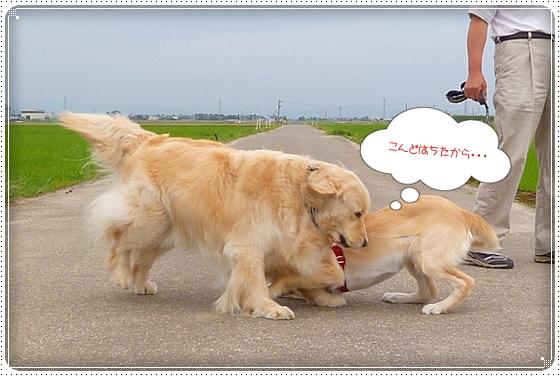 2012,6,18お散歩5