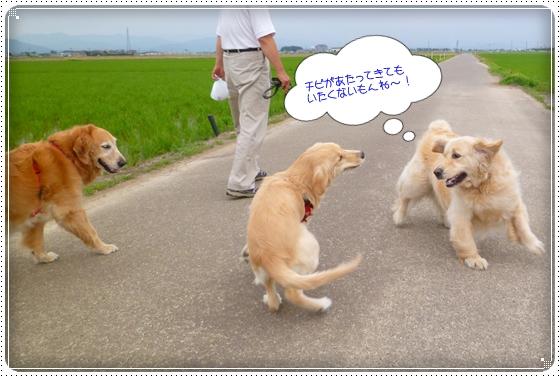 2012,6,18お散歩4