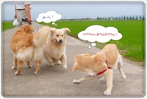 2012,6,18お散歩2