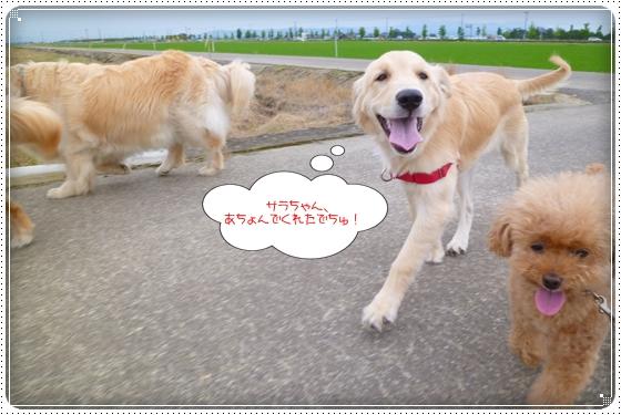 2012,6,18お散歩7