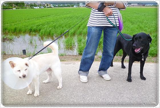 2012,6,22お散歩3