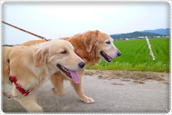 2012,6,24お散歩1