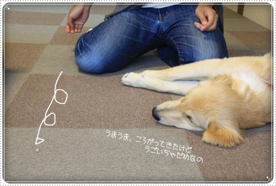 2012,7,4しつけ教室11